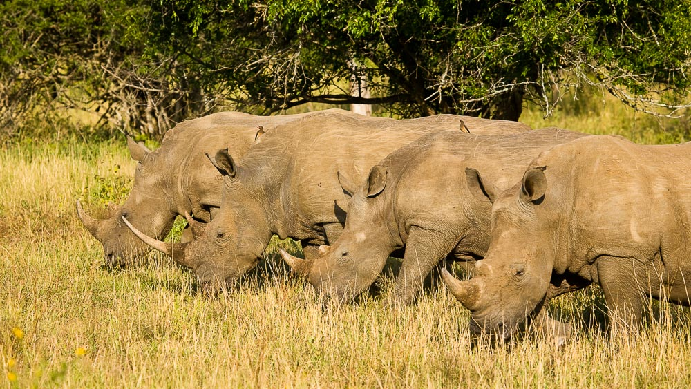 Rhino Ridge Safari Lodge, Afrique du Sud © Isibindi - Roger de la Harpe