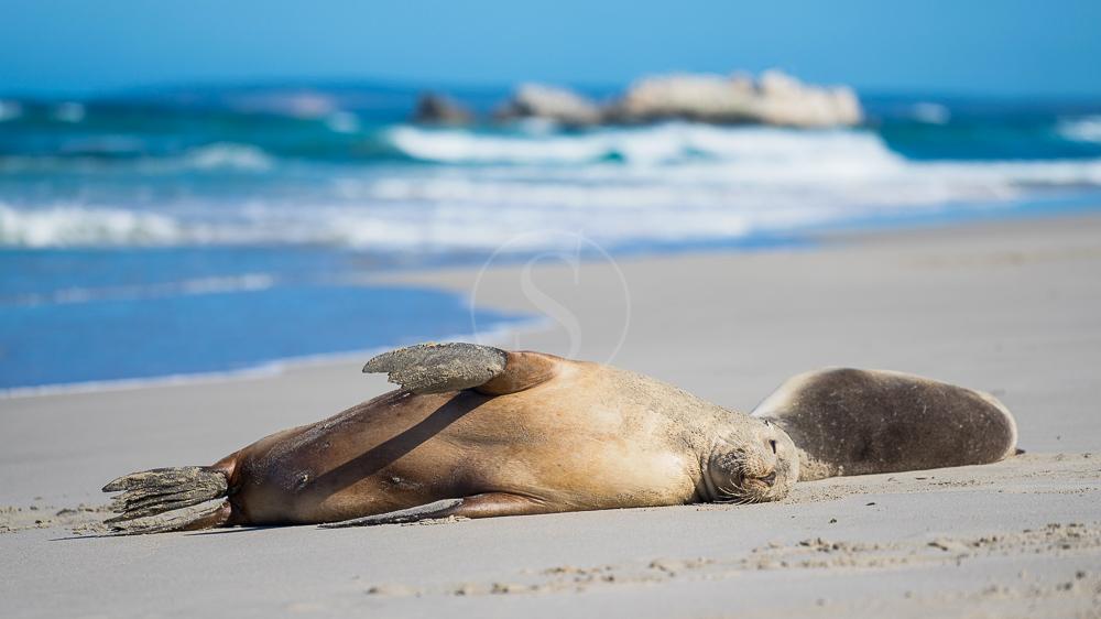 Kangaroo Island, Australie © Shutterstock
