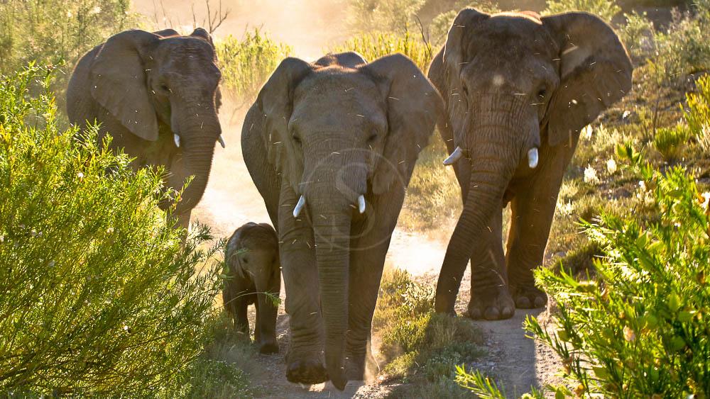 Réserve de Sanbona, Afrique du sud