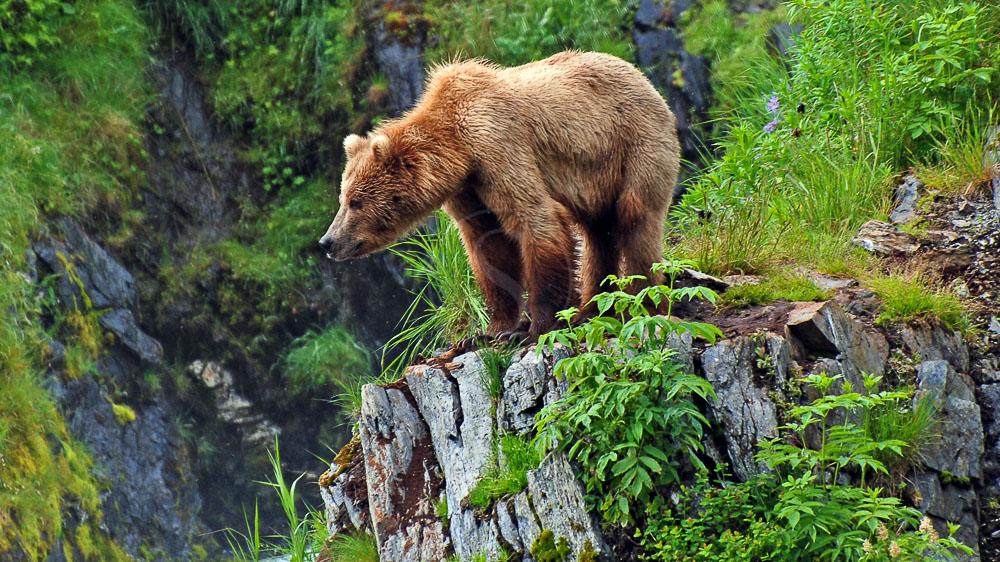 Kodiak, Alaska © Shutterstock