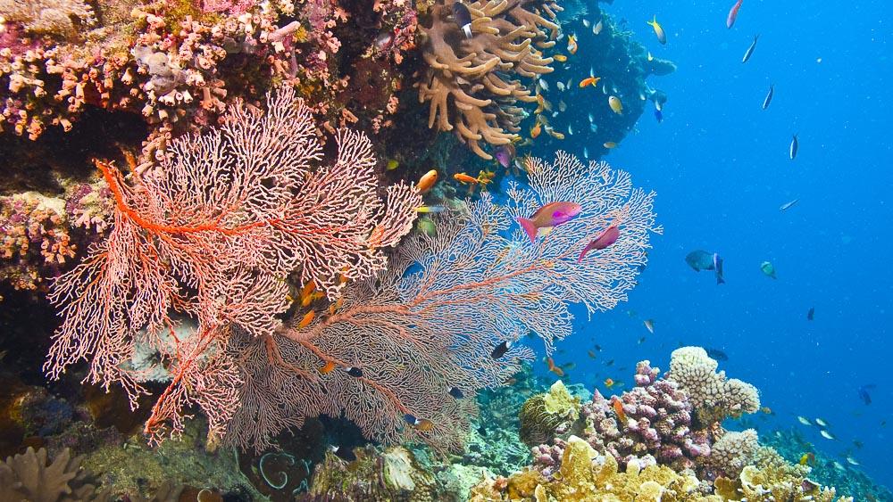 Barrière de corail, Australie © Shutterstock