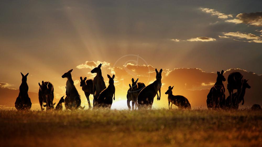 Outback, Australie © Shutterstock
