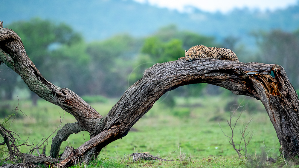 Safari dans le Serengeti avec Singita, Tanzanie © Singita