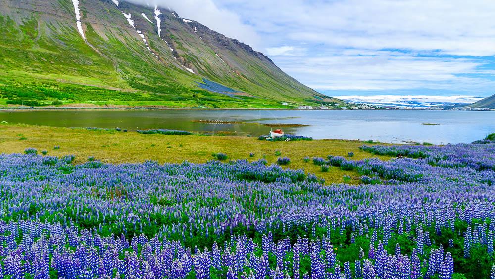 Westfjords, Islande © Sstock