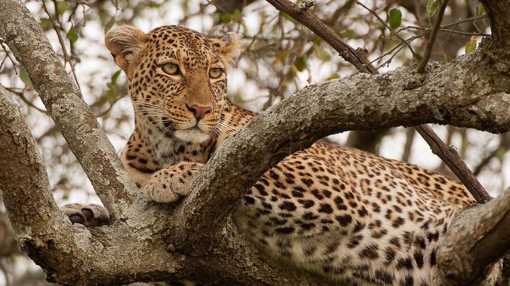Safari dans le Serengeti, Tanzanie