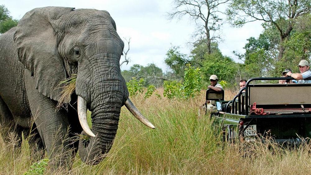 Nottens Bush Camp, Afrique du Sud