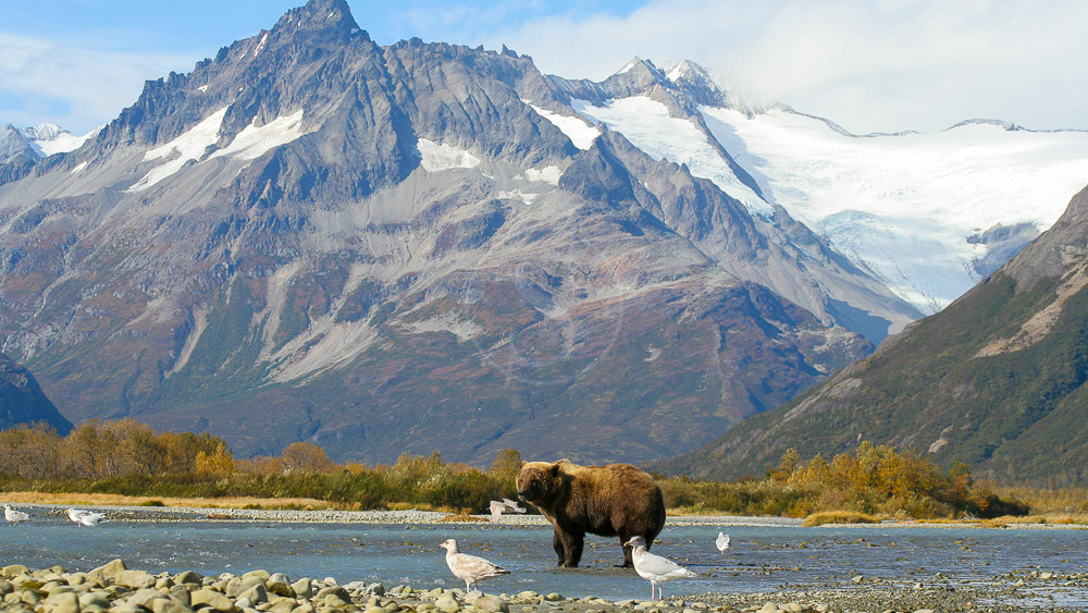 Katmai Wilderness Lodge, Alaska © KWL