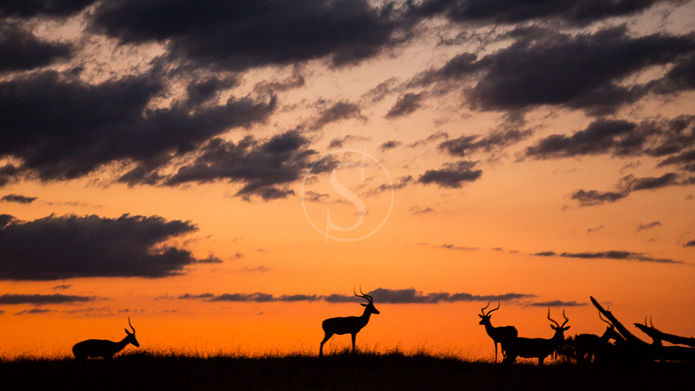 Safari à Sélous, Tanzanie
