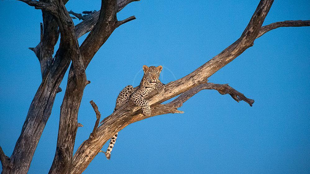 Safari en Afrique du Sud © Alain Pons