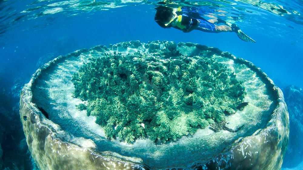 Sal Salis Ningaloo Reef, Australie © Sal Salis