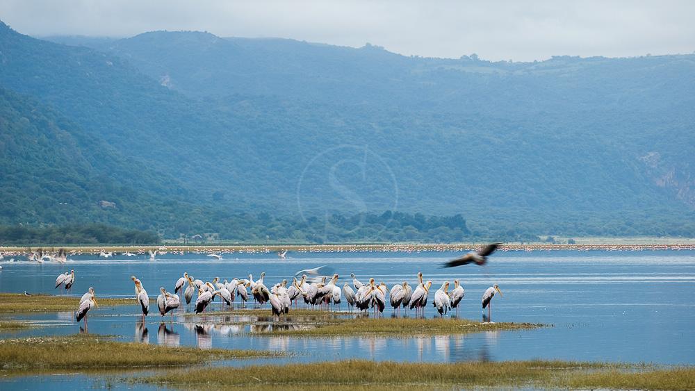 Lake Manyara Tree Lodge, Tanzanie © &Beyond