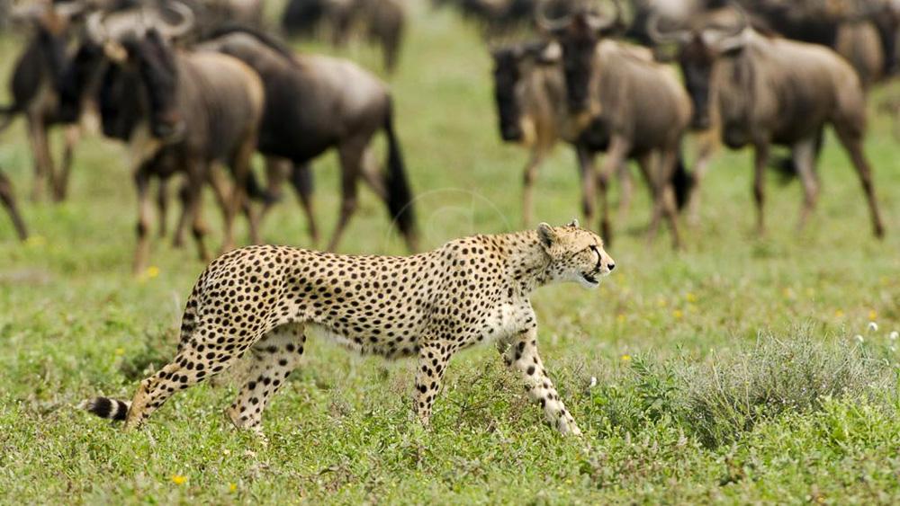 Sanctuary Kusini, Tanzanie © Sanctuary Lodges