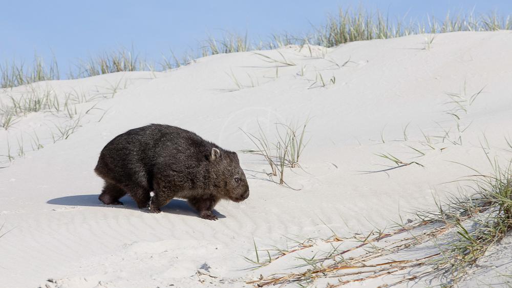 Tasmanie, Australie © OT Australia