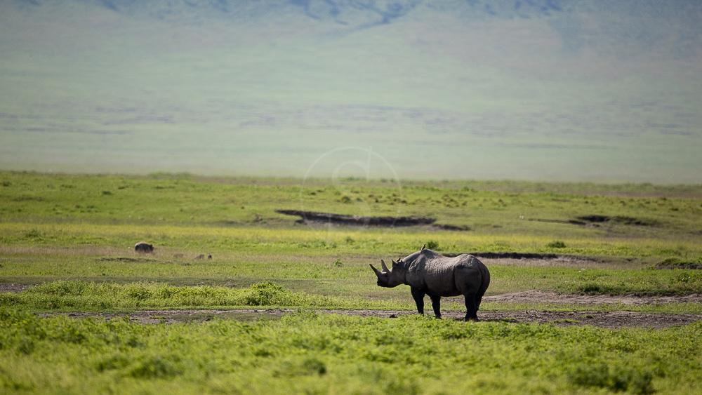 Cratère du Ngorongoro, Tanzanie