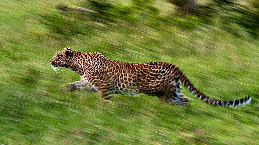 Londolozi Tree Camp, Afrique du Sud © Londolozi
