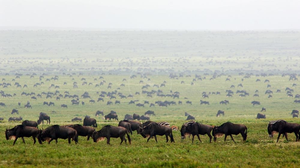 Ubuntu Migration Camp, Tanzanie © Asilia