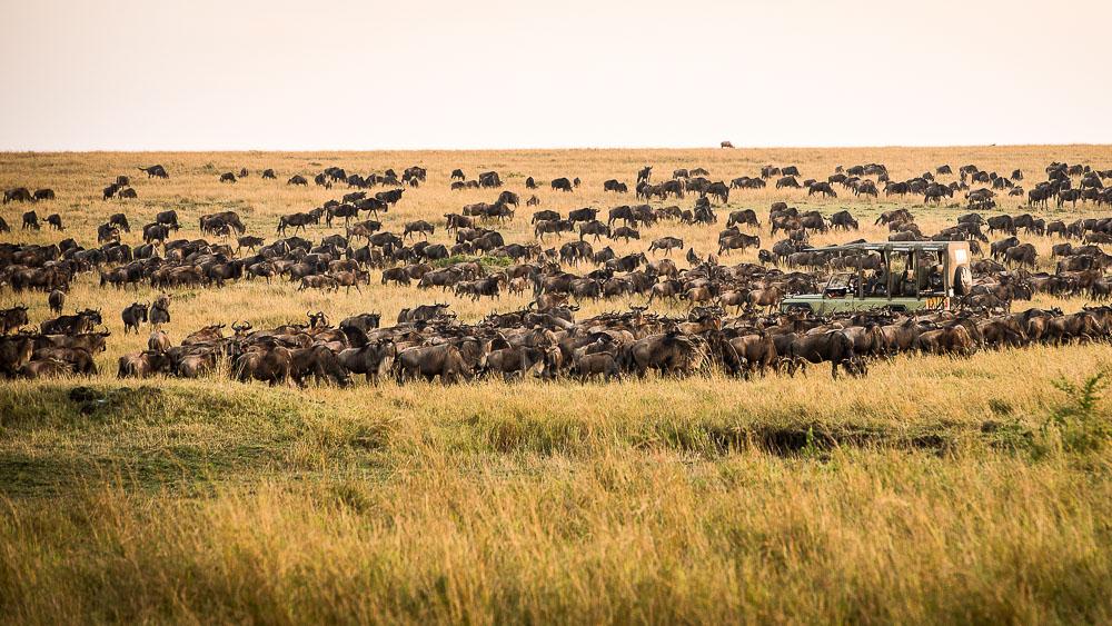 Safari à Kimondo Migration Camp, Tanzanie © Asilia - Eliza Deacon