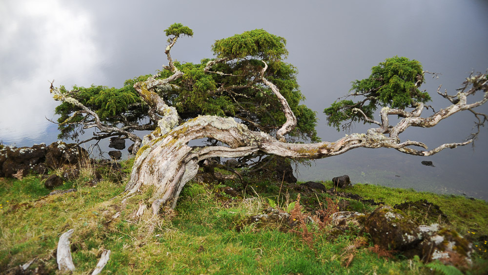 Ambiance des Açores © Tous droits réservés