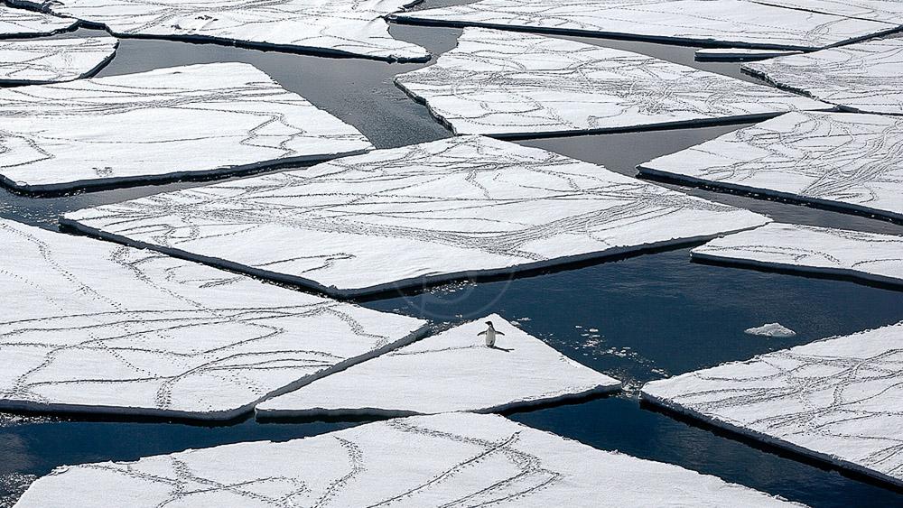 Manchot Adélie, Antarctique © Quark - John Weller