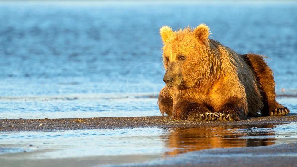 Katmai, Alaska, Etats-Unis © Shutterstock