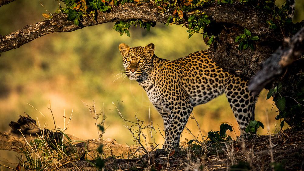 Little Mombo, Botswana © Wilderness Safaris
