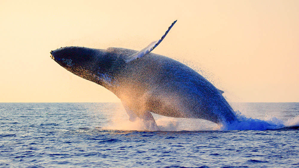 Açores © Shutterstock
