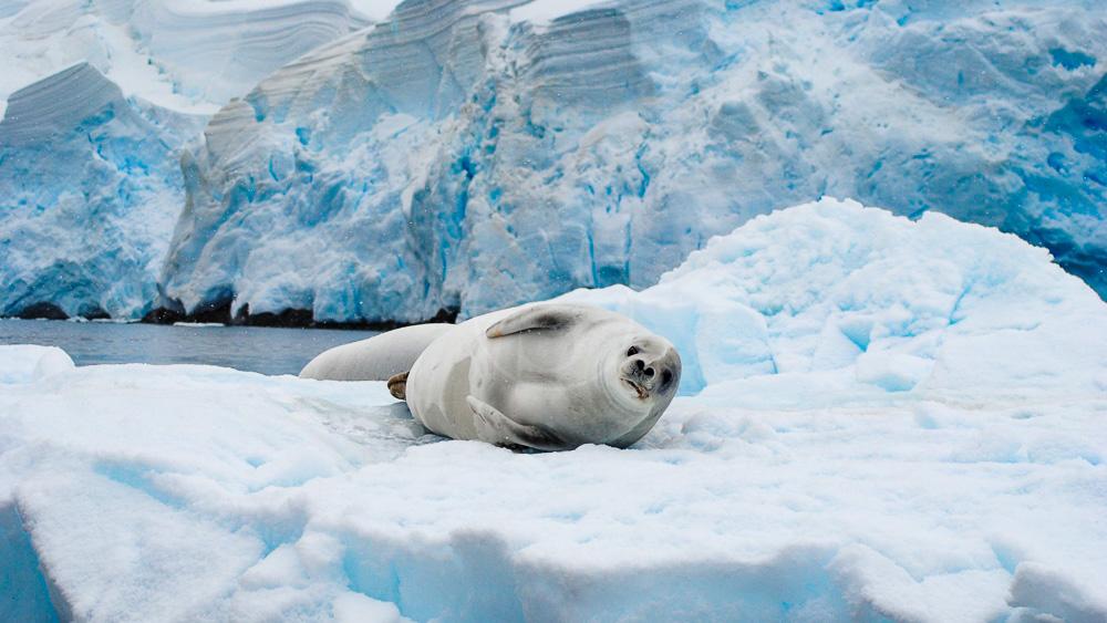 Croisière en Antarctique © Oceanwide Jamie_Scherbeijn