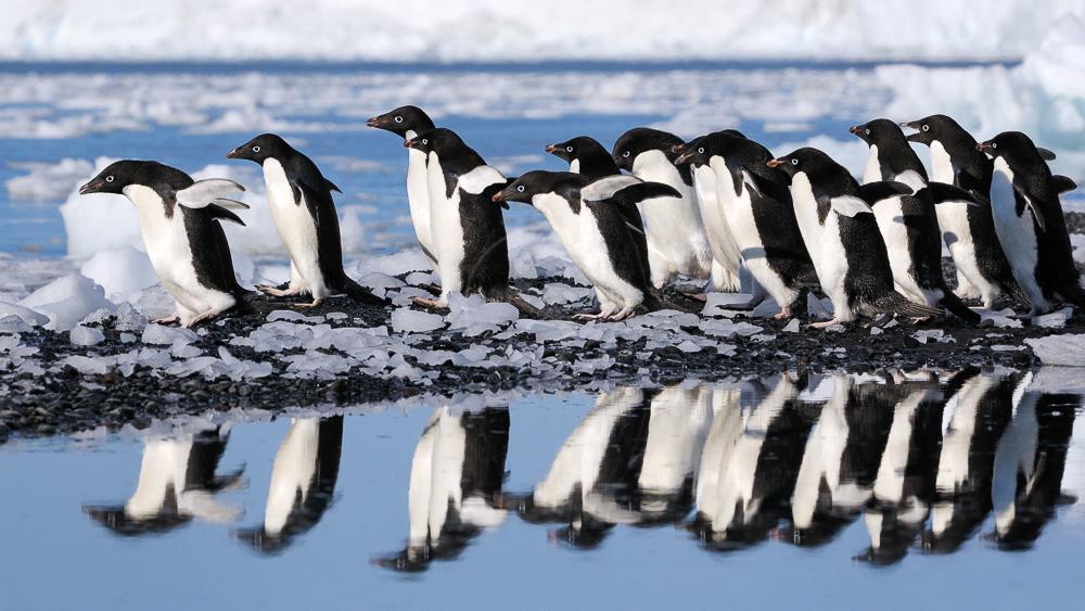 Mer de Ross, Antarctique © Shutterstock