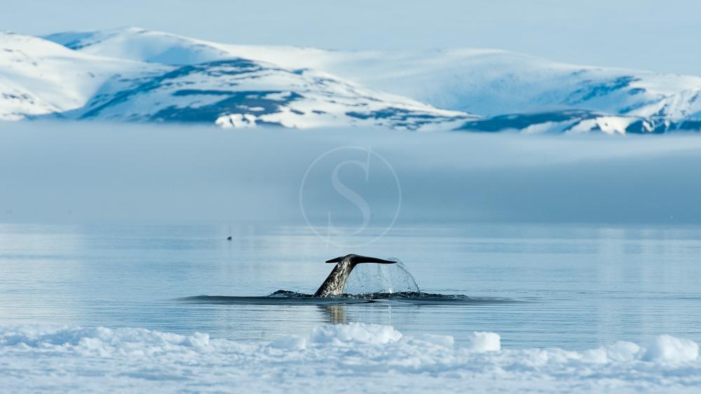 Expédition en Terre de Baffin, Canada © AK - tous droits réservés