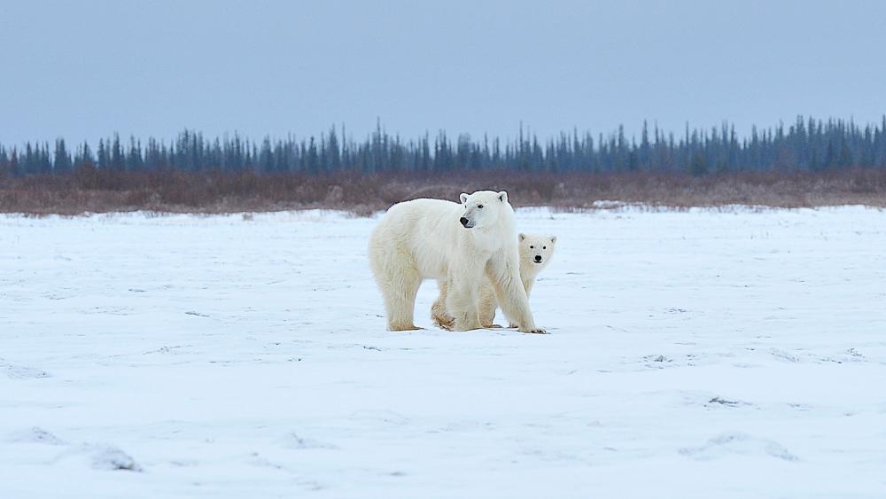 Nanuk Polar Bear Lodge, Canada © Churchill Wild