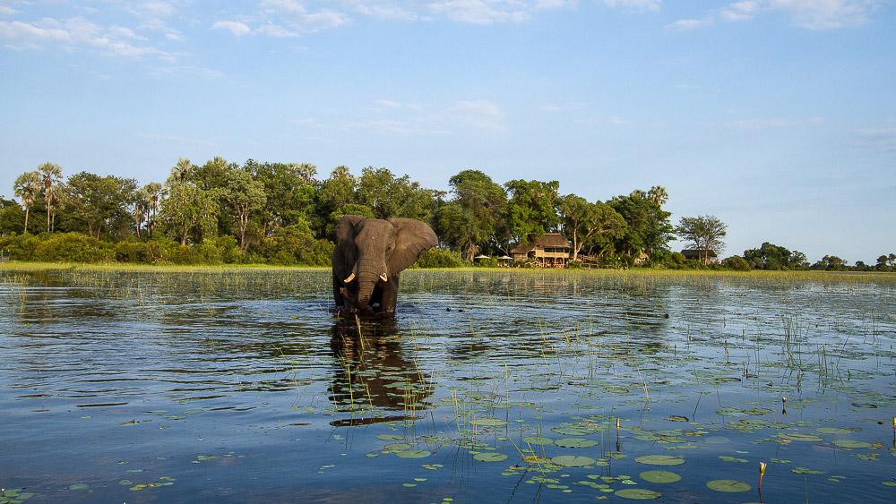 Jacana Camp, Botswana © Wilderness Safaris