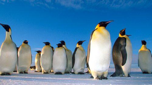 Croisière en Mer de Weddell en Antarctique avec Etendues Sauvages