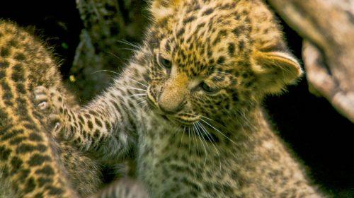 Safari de luxe au Botswana avec le Delta de l'Okavango, par Etendues Sauvages