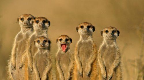 Safari de luxe en Namibie et Voyage sur mesure dans le Namib avec Etendues Sauvages