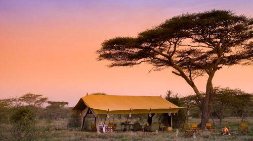 Safari de luxe en Tanzanie et Voyage sur mesure dans le Serengeti avec Etendues Sauvages
