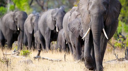 Voyage sur mesure au Zimbabwe dans le parc de Hwange avec Wilderness Safaris, par Etendues Sauvages