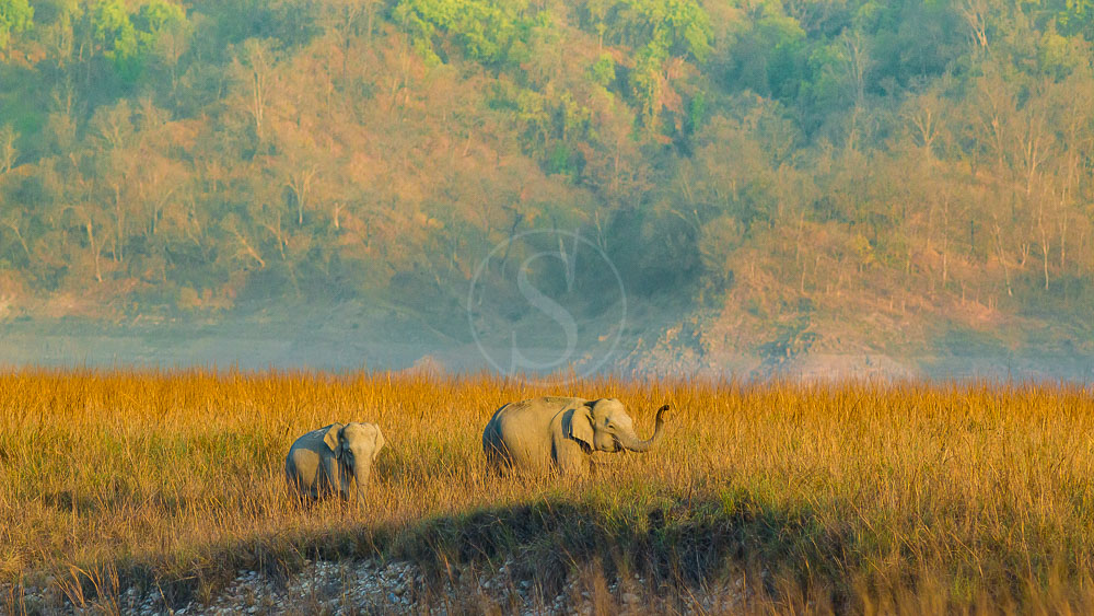 Parc de Corbett, Inde © Shutterstock