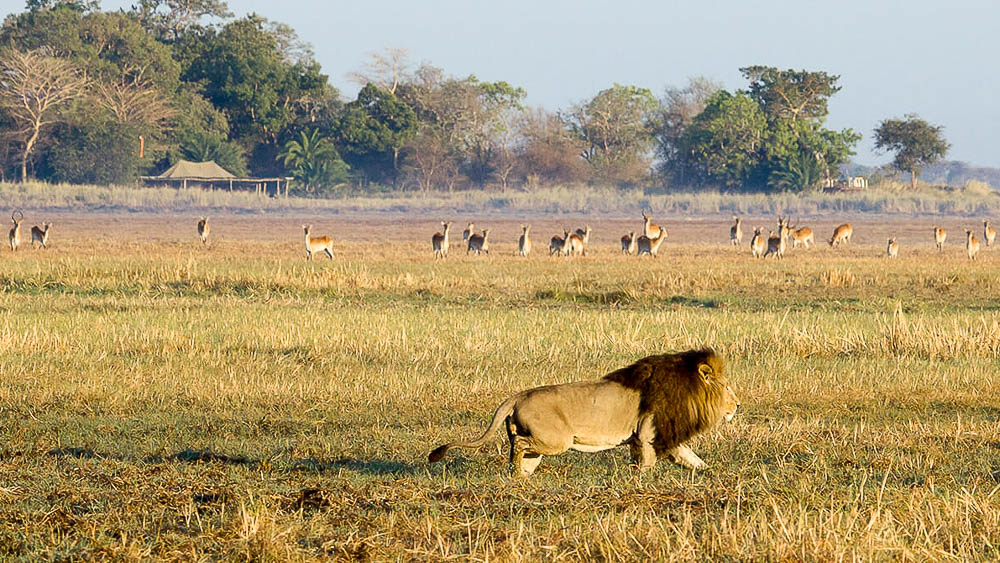 Busanga Bush Camp, Zambie © Wilderness Safaris