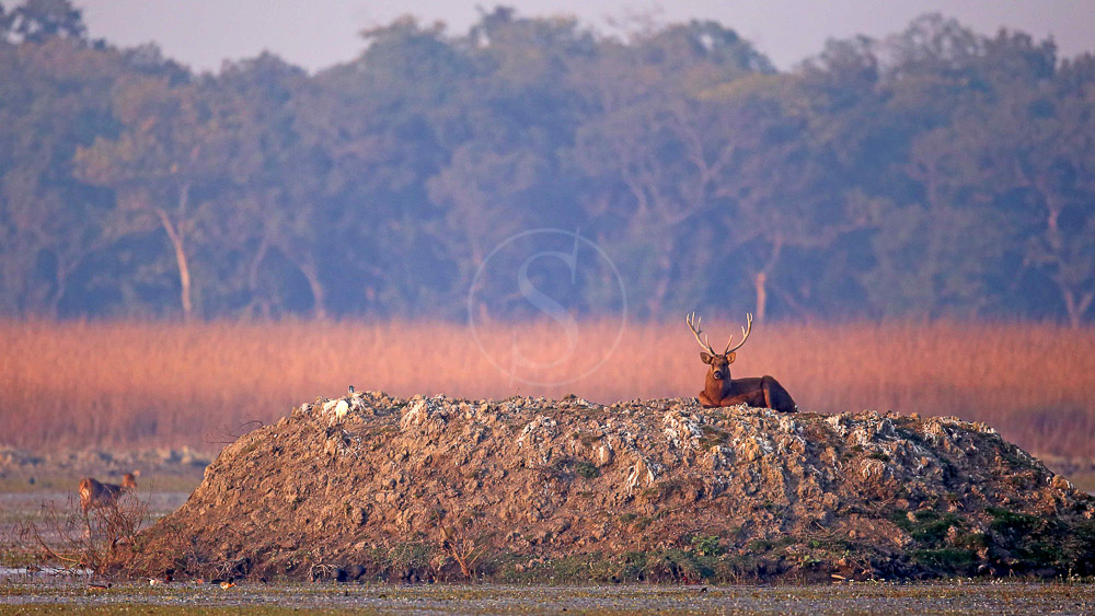 Pilibhit Tiger Reserve, Inde © Kaafila Camps