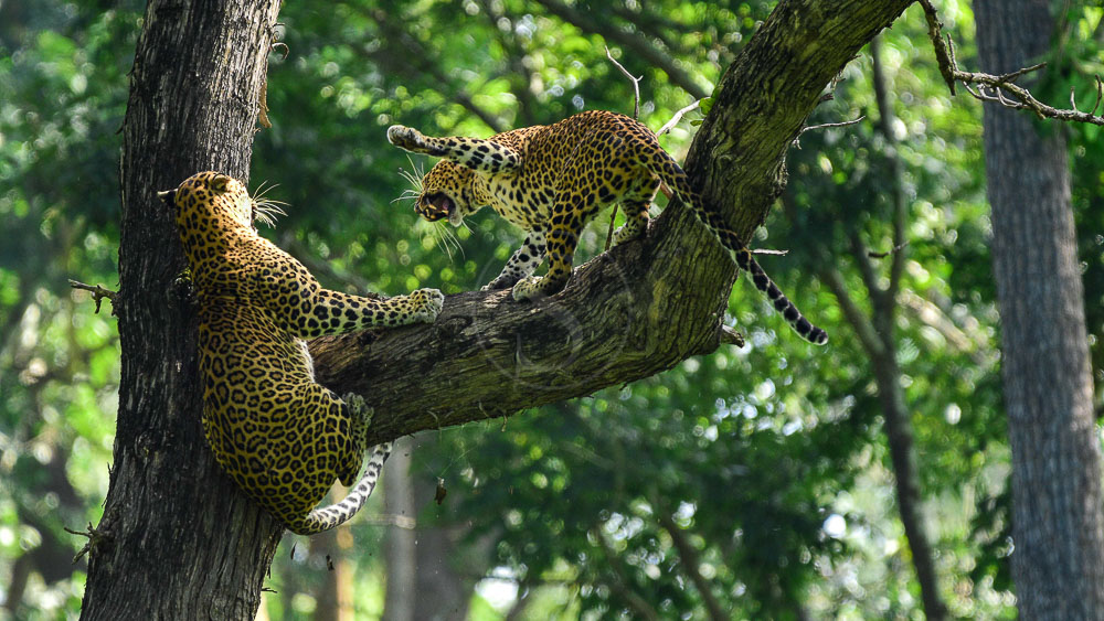 Kaav Safari Lodge, Inde © Tous droits réservés