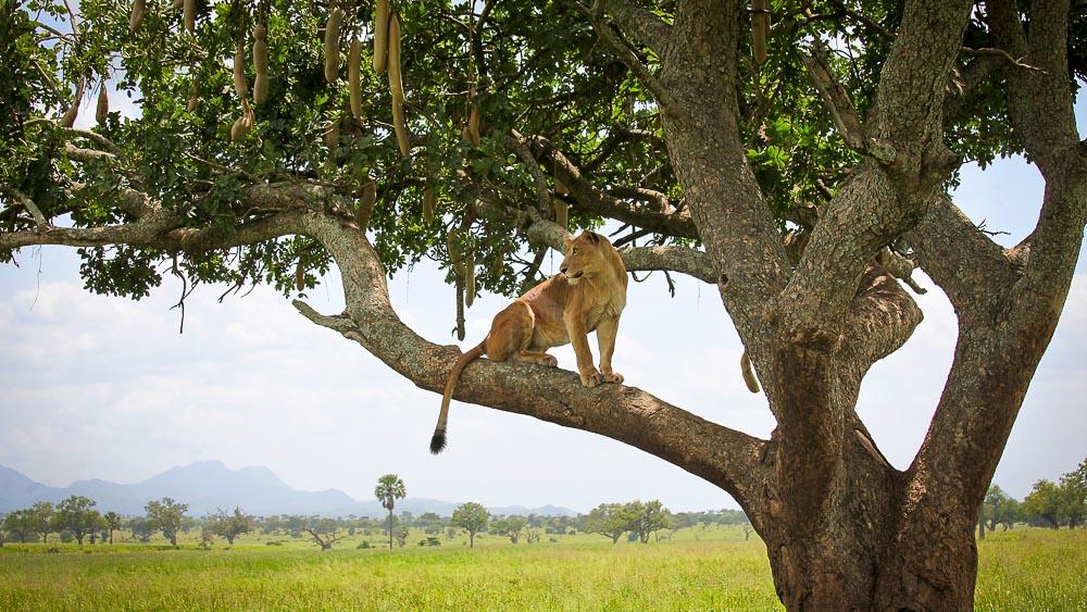 Kidepo National Park, Ouganda © The Uganda Safari