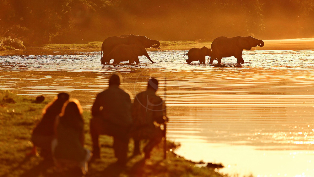 Chongwe River Camp, Zambie © Burrard-Lucas