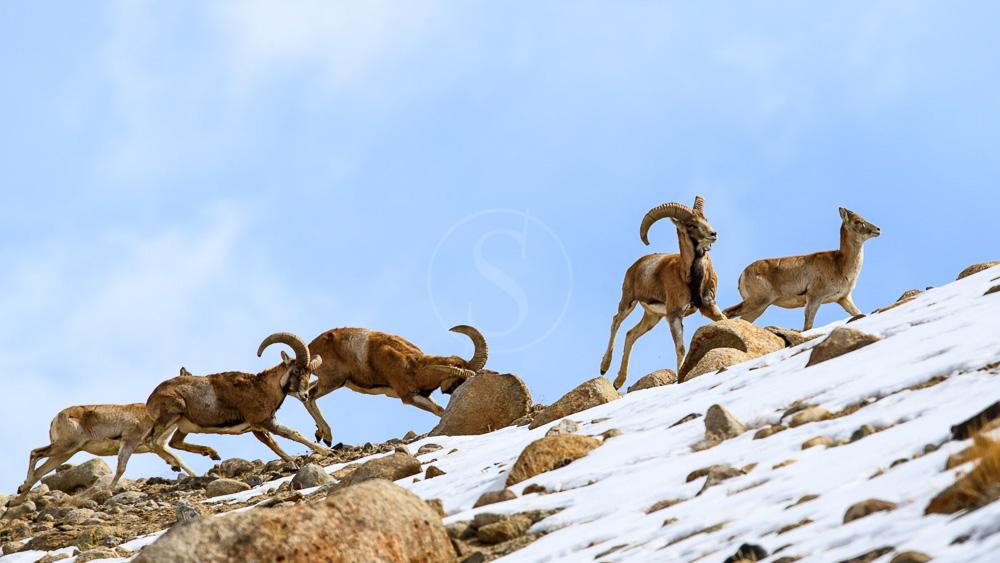 Ambiance du Ladhak, Inde © andBeyond - Nick Garbutt