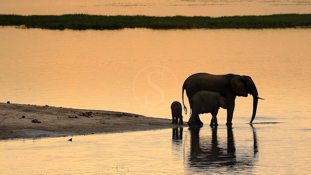 Campement itinérant, Botswana