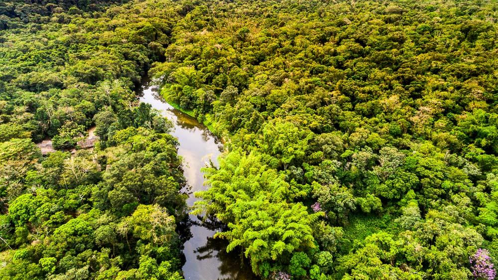 Forêt Amazonienne, Brésil © Shutterstock