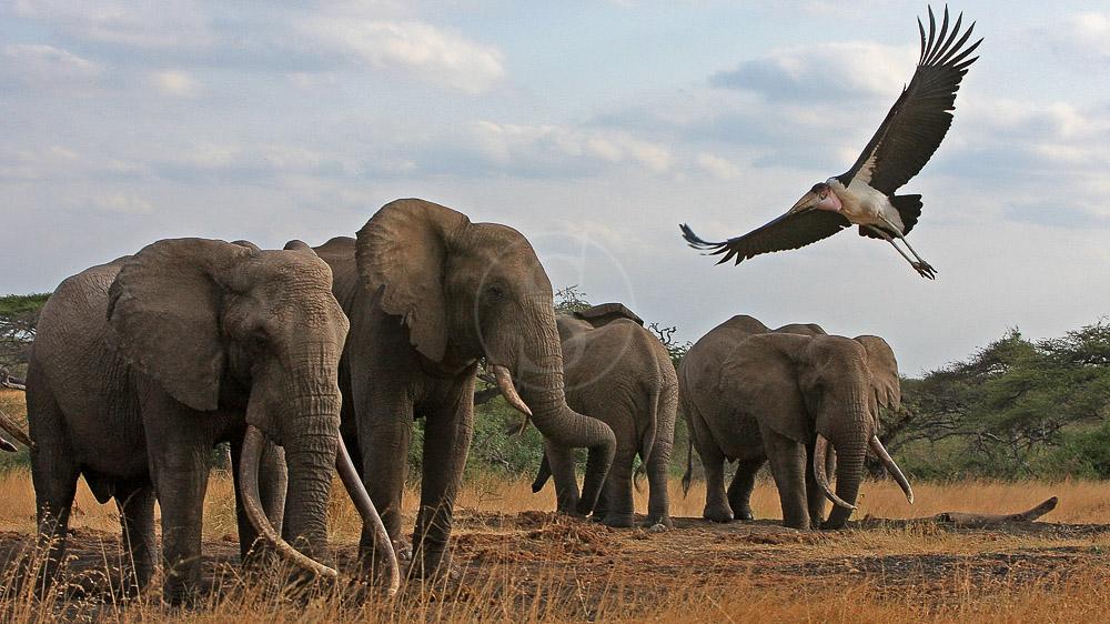 Ol Donyo Lodge, Kenya © Great Plains Conservation