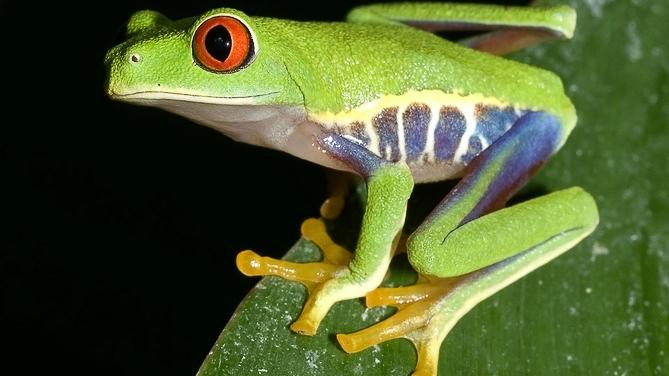 Amazonie, Brésil © Shutterstock