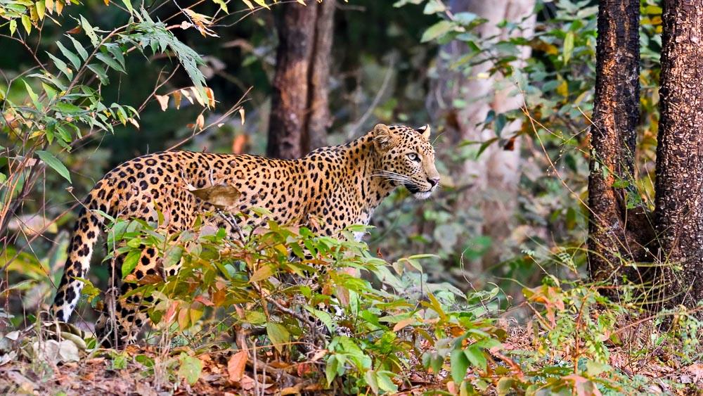 Parc de Tadoba, Inde © Shutterstock