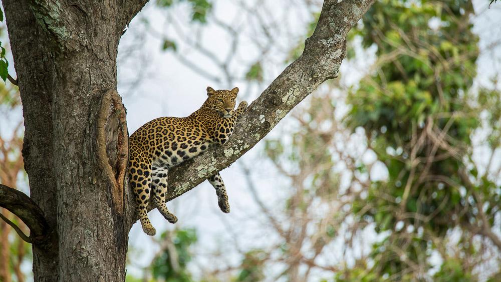 Parc de Nagarhole, Inde © Shutterstock