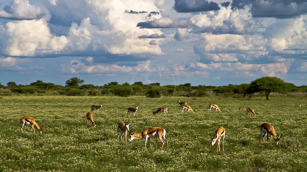 Kalahari Camp, Botswana © Wilderness Safaris